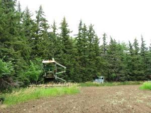 Tree rows 006corrected