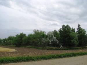 Tree rows 011
